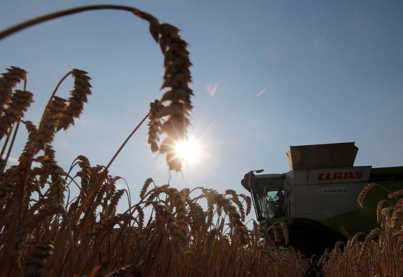Большая часть озимых зерновых на Украине в хорошем состоянии -- замминистра экономики