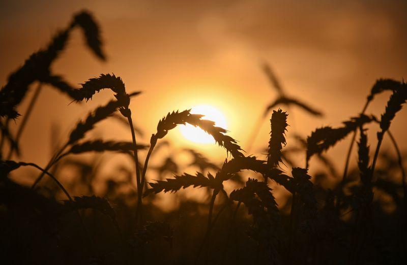 Мягкая зима значительно улучшила состояние озимых в РФ -- Гидрометцентр