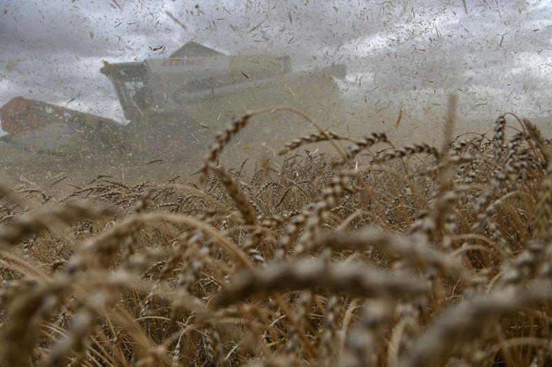 Экспортные цены на пшеницу РФ снизились на прошлой неделе вслед за мировыми