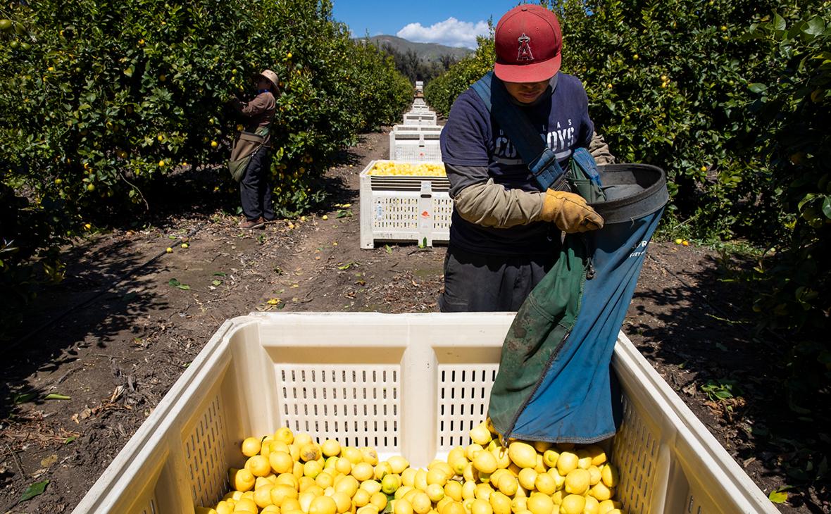 Лимоны стали самым подешевевшим за год продуктом