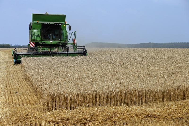 Цены на российскую пшеницу обновили 7-летний максимум