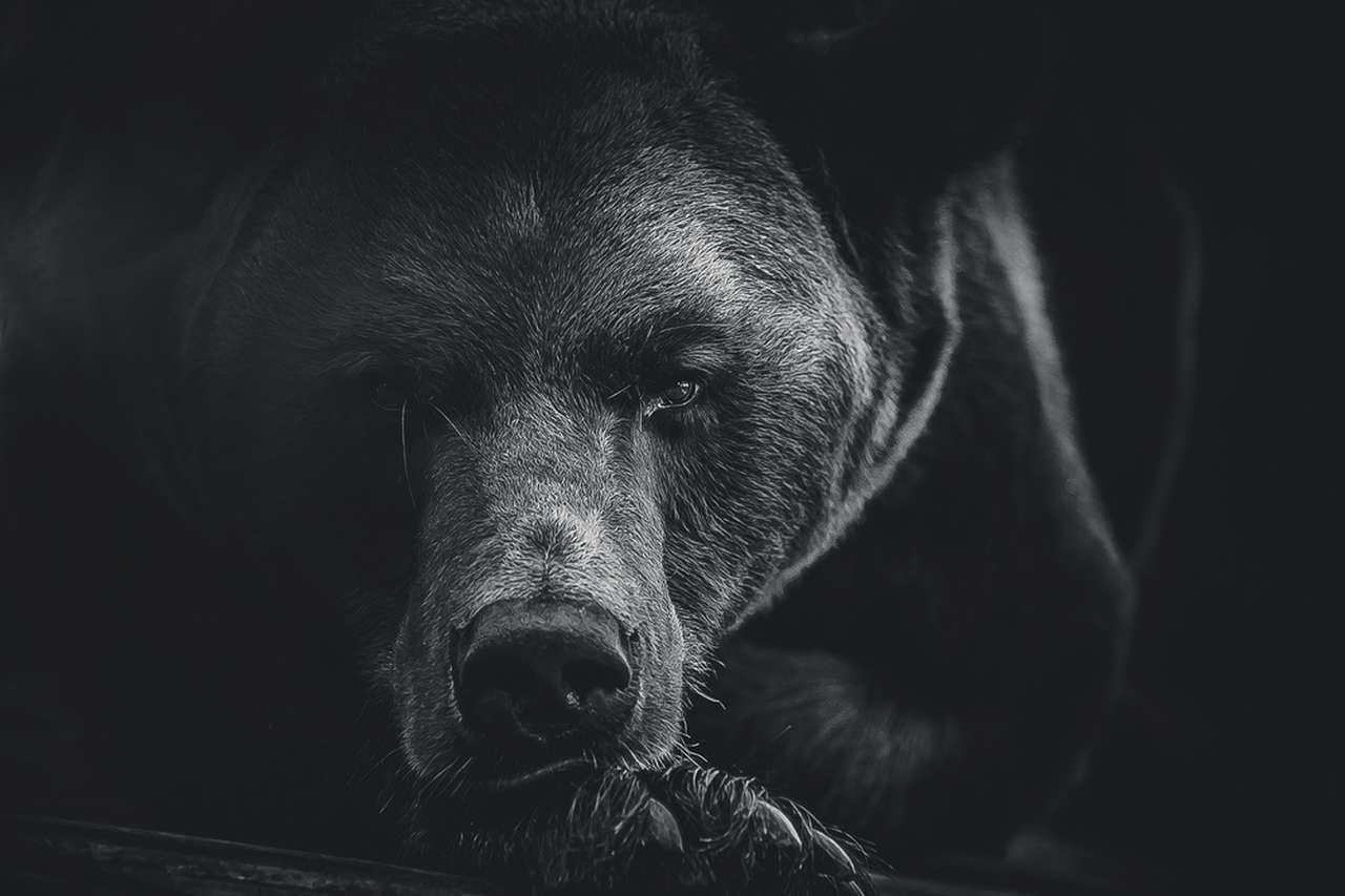 Премаркет. В Гонконг пришел медведь