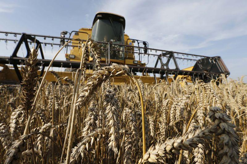 Экспортные цены на пшеницу РФ продолжили рост десятую неделю кряду