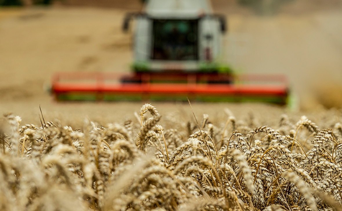 Минсельхоз ответил на заявления о дефиците твердой пшеницы