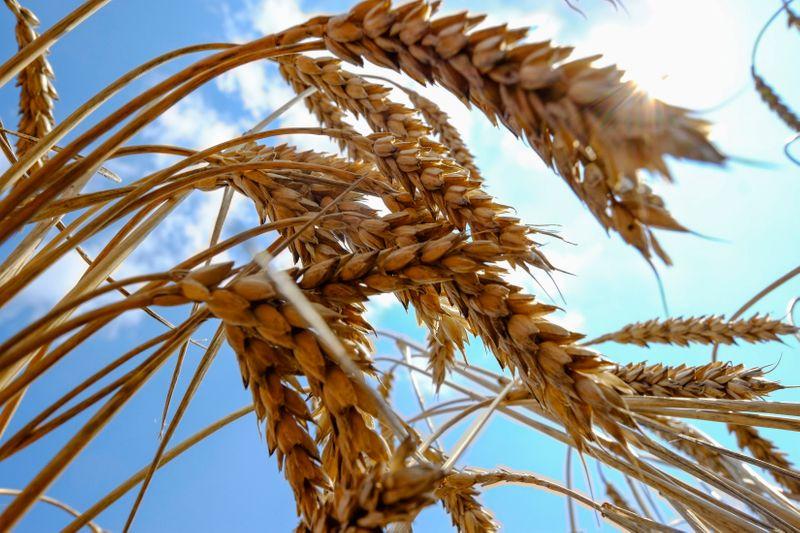 Украина собрала почти 47 млн т зерна урожая 2021 -- Минагрополитики