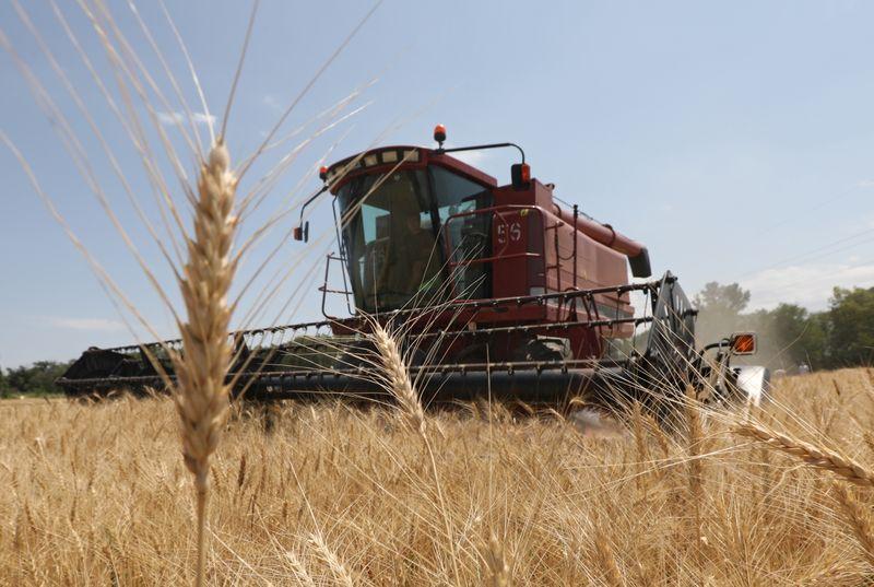 Казахстан убрал 98,5% площадей зерновых и зернобобовых, намолотил 15,5 млн т зерна