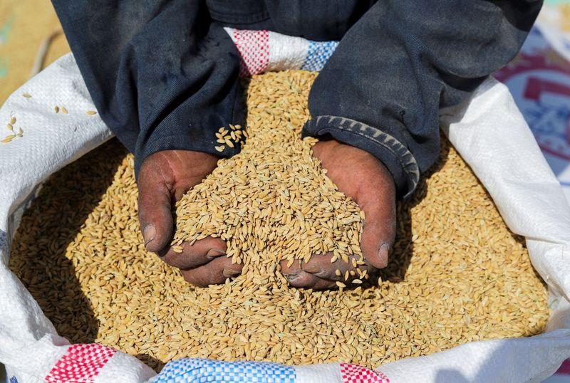 Минсельхоз РФ планирует экспортную зерновую квоту на вторую половину сезона 2021/22гг