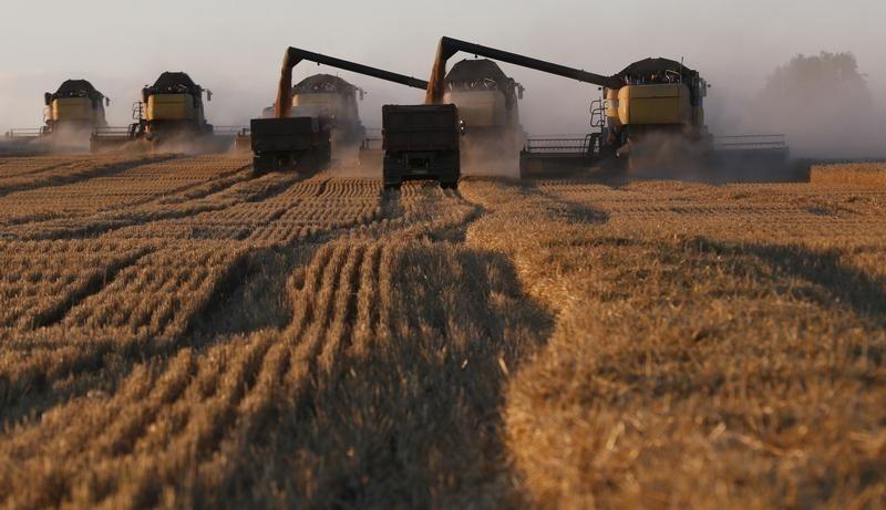 Эксперты прогнозируют урожай пшеницы в 2021 году на уровне 75-77 млн тонн