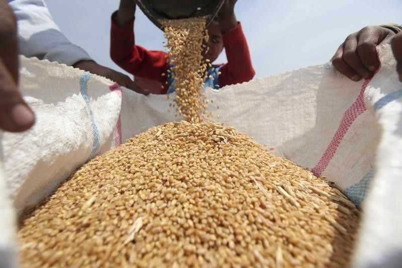 Эксперты прогнозируют снижение экспорта пшеницы из РФ в октябре до 2,8-3 млн тонн