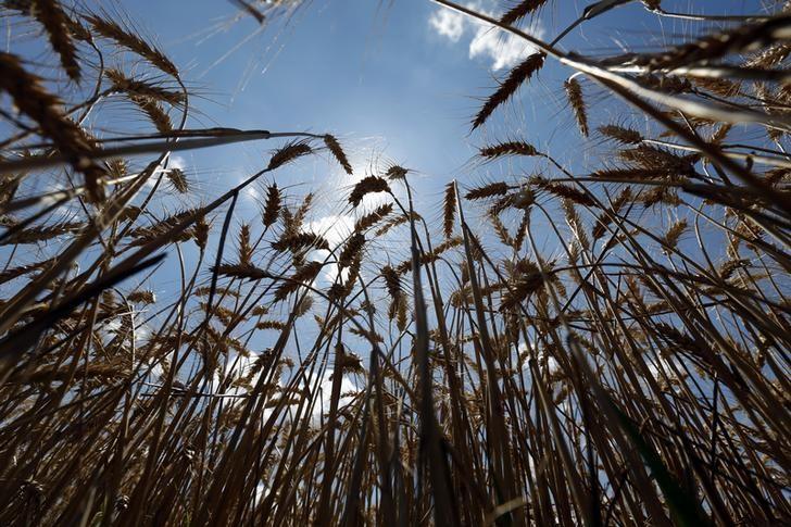 Экспортная пошлина на пшеницу в РФ с 1 марта повышается в 2 раза