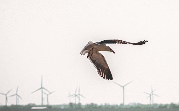 В США для спасения птиц ветрогенераторы оборудуют «умными» камерами