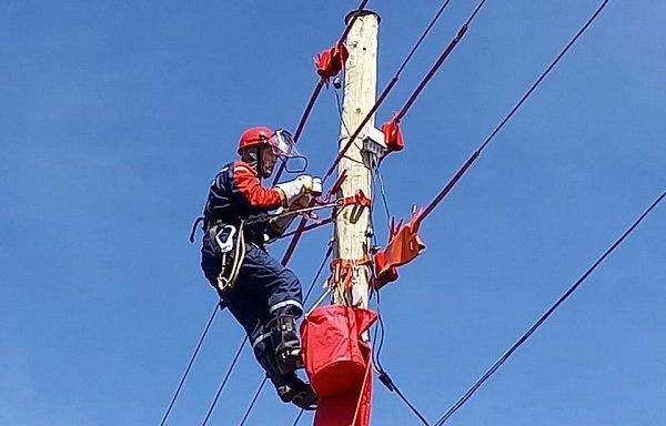 «Россети Ленэнерго» продолжает ремонтную кампанию