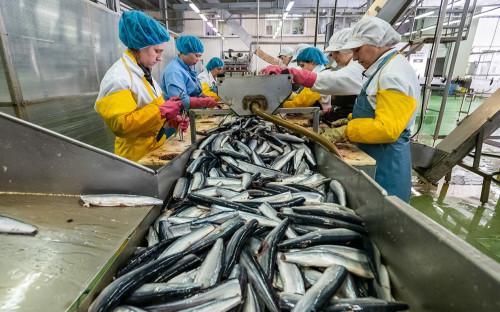 Старейший производитель рыбных консервов заявил о массовой подделке сайры