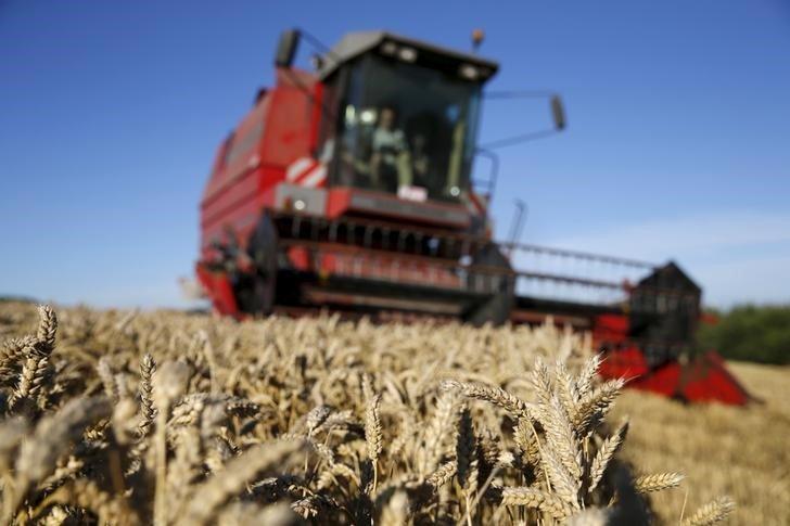 К 10 сентября в России собрано 70 млн тонн пшеницы