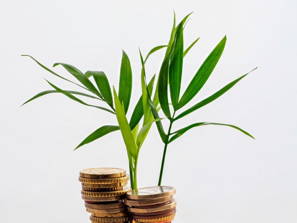 5 рабочих бизнес-идей для открытия малого бизнеса